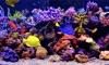Amаzing Aquarium
