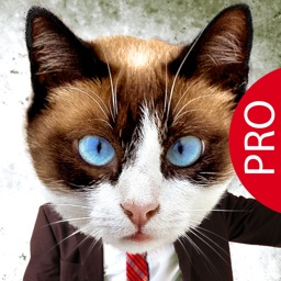 Animal Face Pro - Cat stickers for your photos and more
