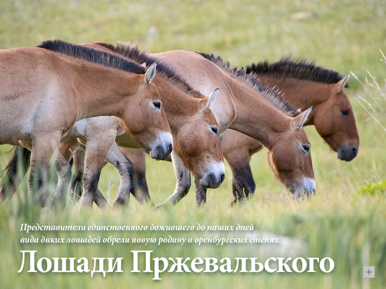 National Geographic Russia screenshot-4