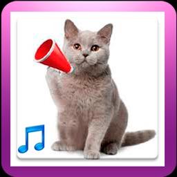 Best Cat Sounds. Free Kitty Kitten Sounds.