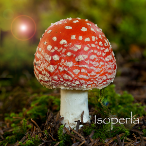 Mushroom Id North America - Fungi Identification Guide to Toadstools and Mushrooms app