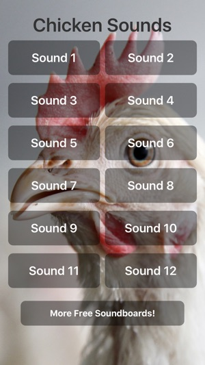 Chicken Sounds! on the App Store