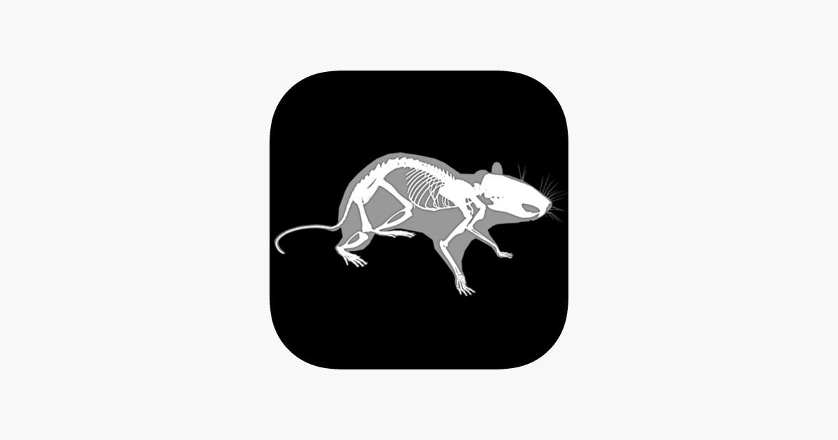 3d Rat Anatomy On The App Store