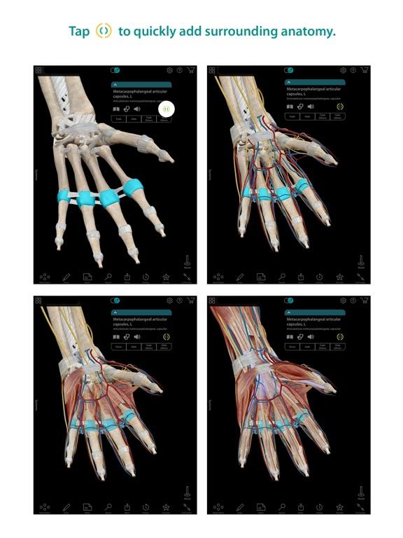 Human Anatomy Atlas – 3D Anatomical Model of the Human Body-ipad-1