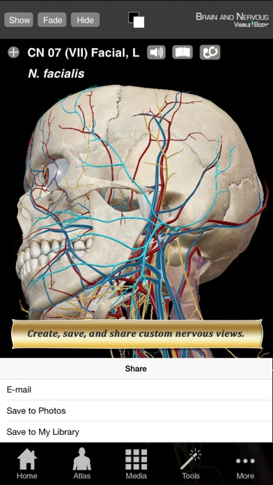 Brain and Nervous Anatomy Atlas: Essential Reference for Students and Healthcare Professionalsのおすすめ画像3