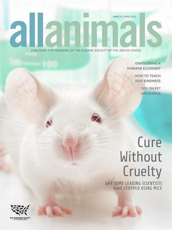 All Animals Magazine