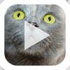 点击获取Slideshow Karaoke: Presentation Improv Game
