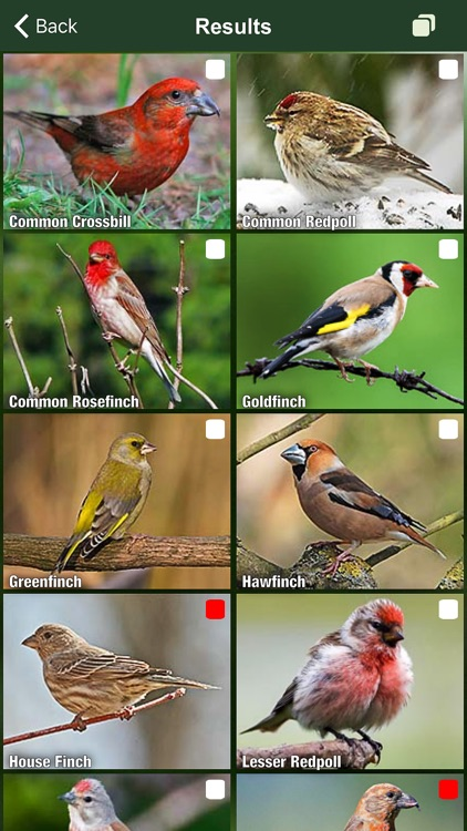 All Birds Netherlands - A Complete Field Guide to the Official List of Bird Species Recorded in the Netherlands screenshot-3