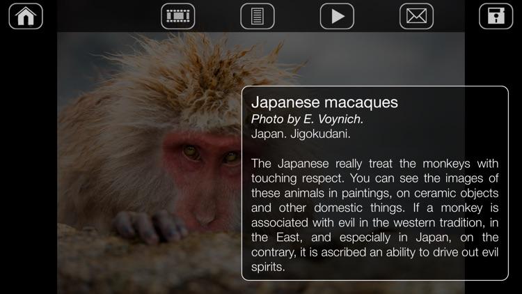 Japanese Macaques screenshot-3