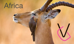 Africa. Wild animals.