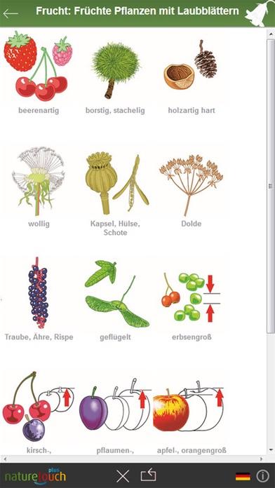 3000 pflanzen bestimmen naturetouch app image