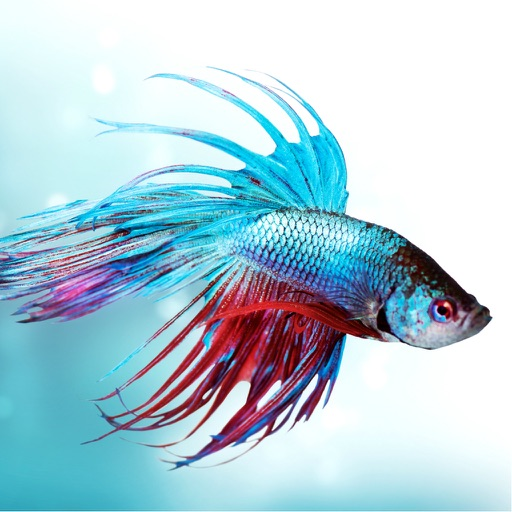 Betta Fish Care - Tips For Keeping A Happy And Healthy Betta