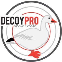 Snow Goose Decoy Spreads Hunting Diagrams Geese