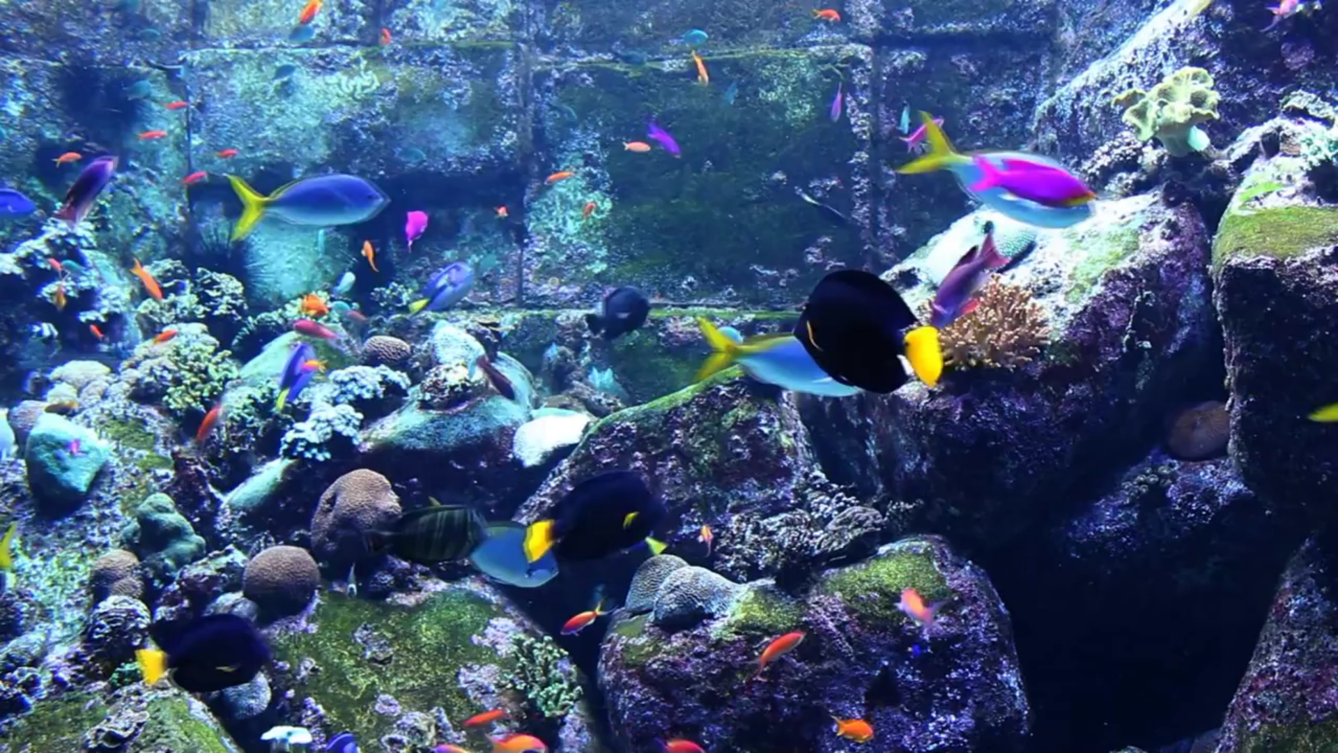 Real Aquariums HD screenshot 1