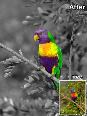 Screenshot #5 for Color Recolor Effects - Photo Splash FX and Paint Highlights into Black & White Pictures