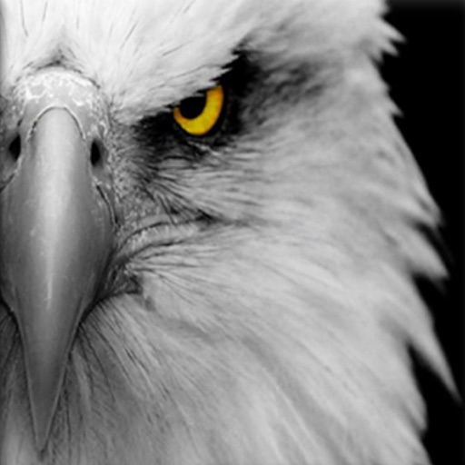 Eagle River App