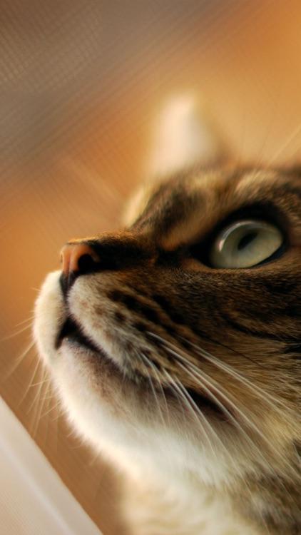 Cat Wallpapers: Retina Display HD Backgrounds screenshot-4