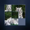 Ankit Moradiya - Puzzle Animal In Watch artwork