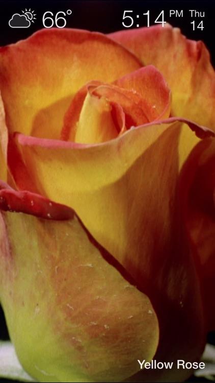 Magic Flowers - Visual Healing screenshot-3
