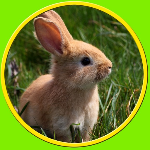 competition for rabbits - free game