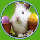kids love rabbits - free game icon
