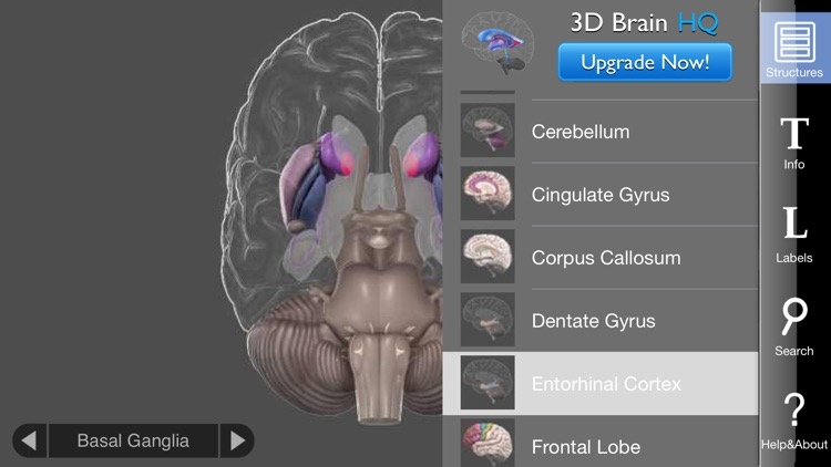 3D Brain screenshot-3