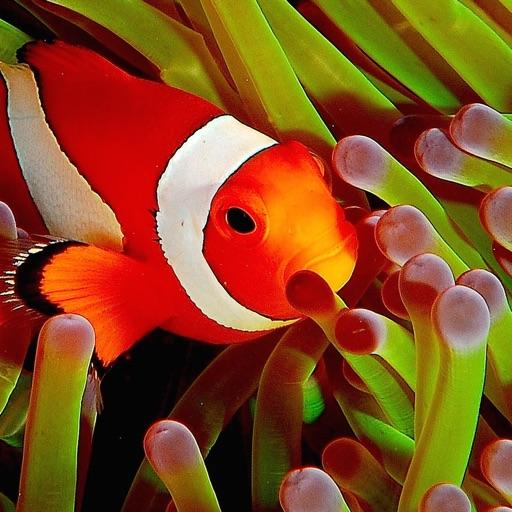 Fish Expert Pro icon