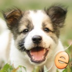 Jigsaw Wonder Puppies Puzzles for Kids icon