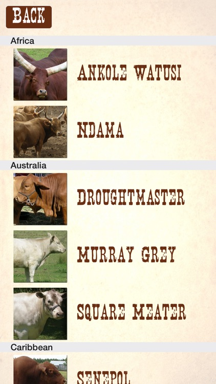 Cattle Breeds: Various Types of Cattle