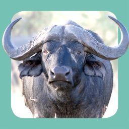 Sasol Wildlife for Beginners (Lite): Quick facts, photos and videos of 46 southern African animals