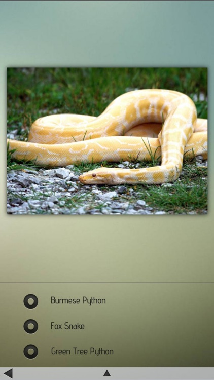 Snakes-Encyclopedia screenshot-4