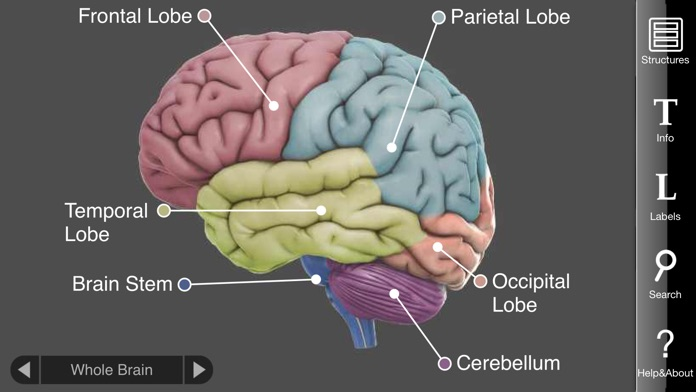 3D Brain Screenshot