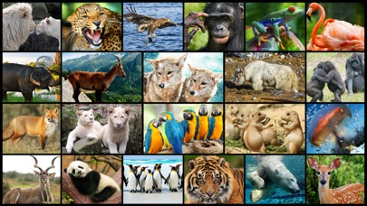 Amazing Wild Animals - Best Animal Picture Puzzle Games for