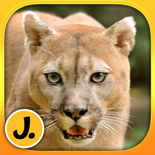 Jungle and Rainforest Animals: puzzle game