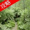 视频攻略 - 森林 (The Forest)