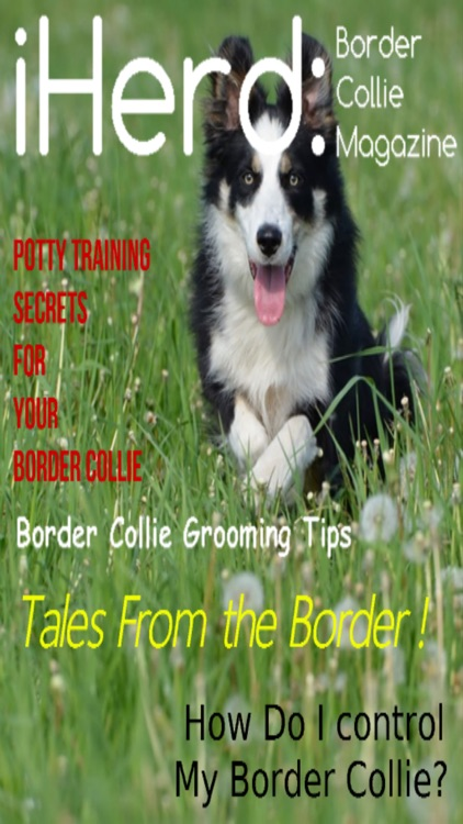 iHerd: Border Collie Lovers Magazine screenshot-3