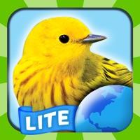 Codes for My Bird World Lite Hack