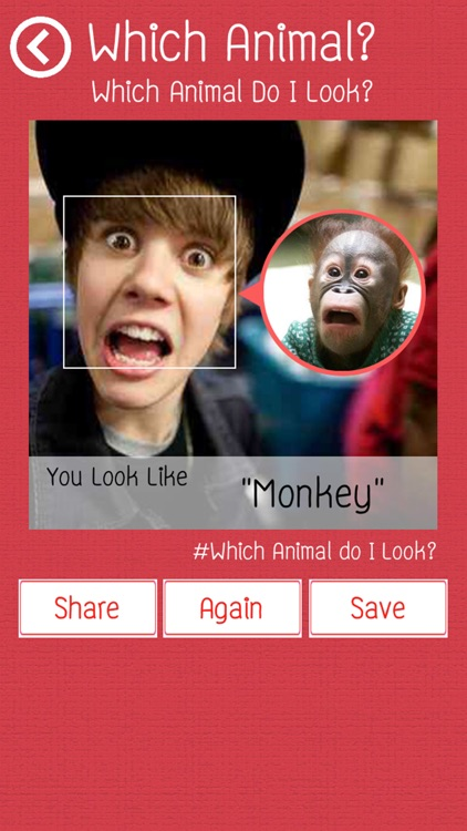 Which Animal Do I Look?