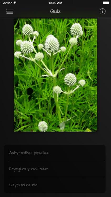 Medicinal Herbs Guide screenshot-3