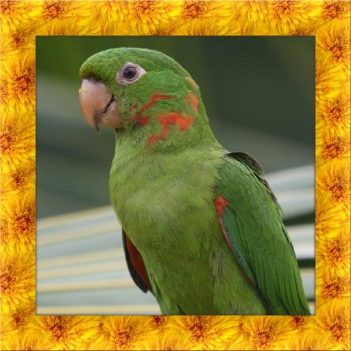 Parakeet Simulator