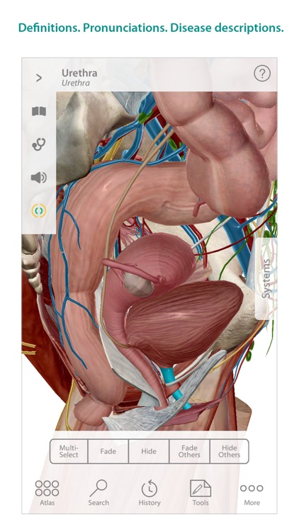 Human Anatomy Atlas – 3D Anatomical Model of the Human Body screenshot-4