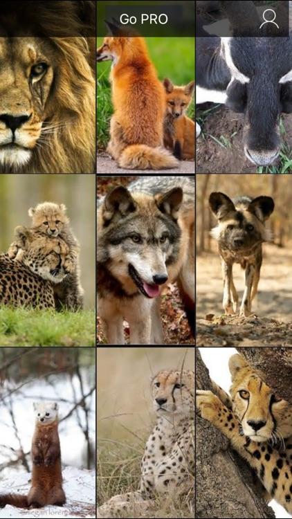 Wildlife Animals Wallpapers, Safari & Zoo Pictures