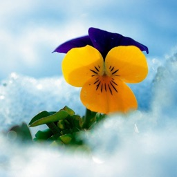 Winter Flowers Wallpapers For This Christmas Fest