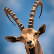 Deer Hunting Game 2016 : Sniper Kill Pro