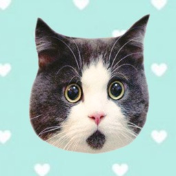 Cute cat with emotion face sticker pack