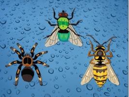 Bugs - Sticker Pack