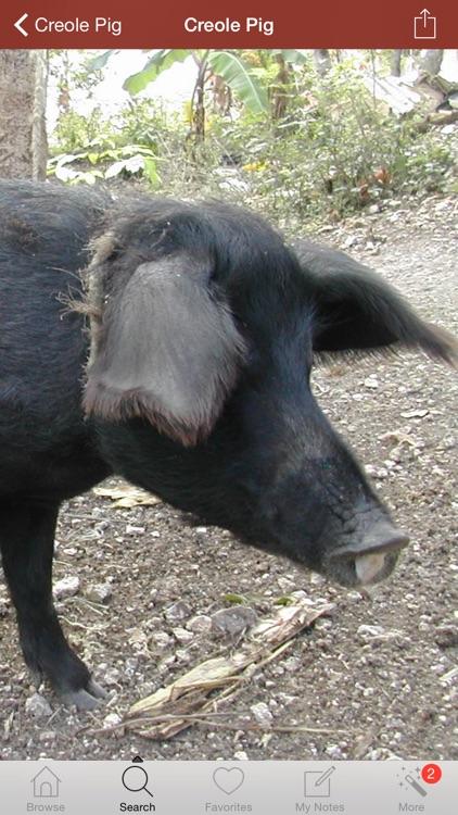 1500 Pig Breeds, Medical Dictionary