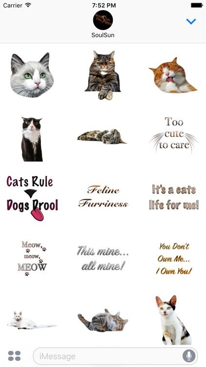 Cute Kitty Cats