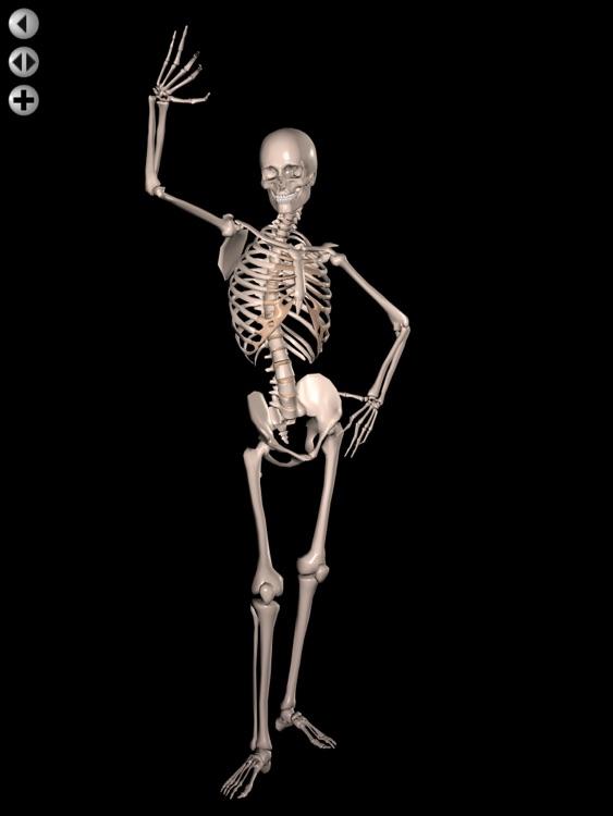 360 Anatomy for Artists HD: Male Figure screenshot-3