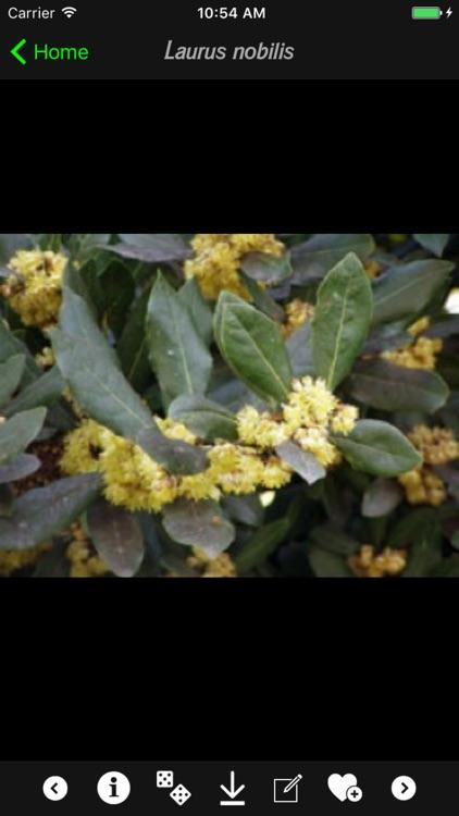 Medicinal Plants Guide screenshot-4